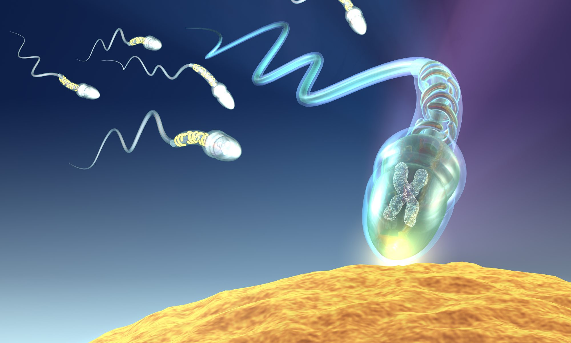 A sperm fertilizing an egg. (iStockphoto/Thinkstock)