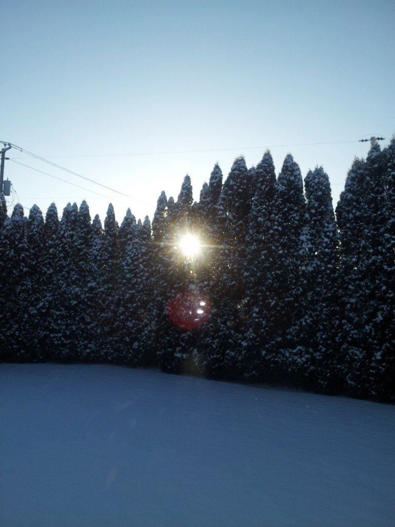 Sunburst on Christmas Day (Dr. Noorali Bharwani)