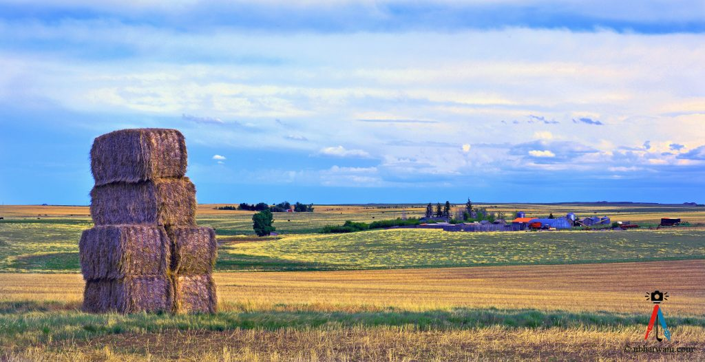 Alberta countryside. (Dr. Noorali Bharwani)