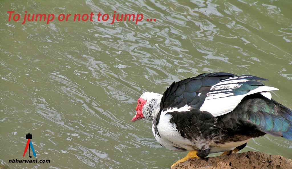 To jump or not to jump. (Dr. Noorali Bharwani)