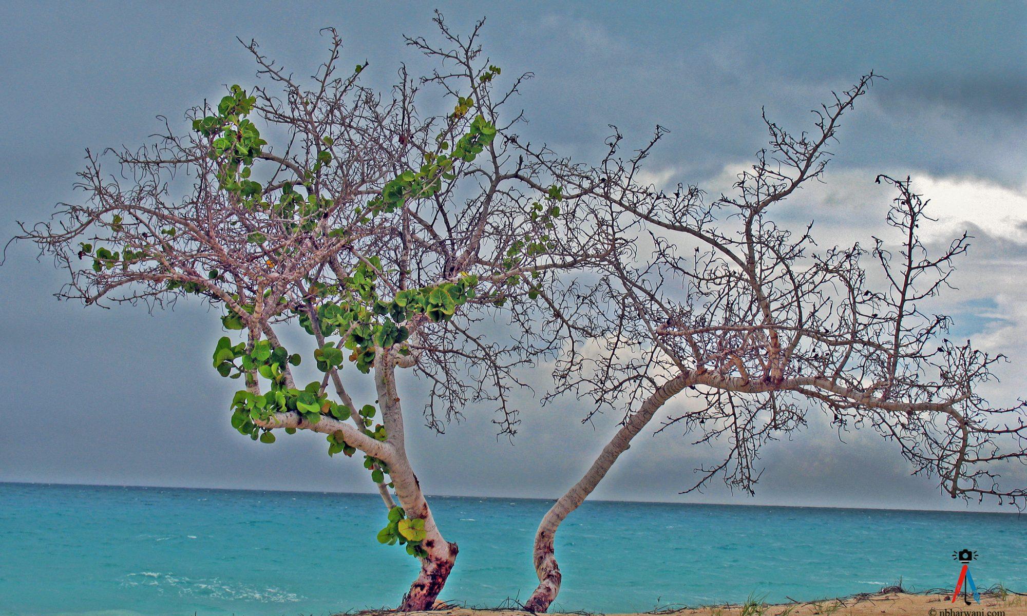 Antigua (Dr. Noorali Bharwani)