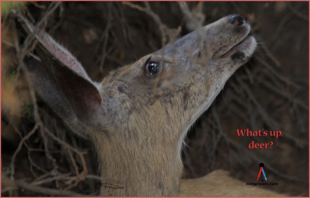 Whats up, deer? (Dr. Noorali Bharwani)