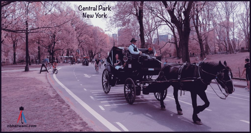 Central Park in New York City. (Dr. Noorali Bharwani)