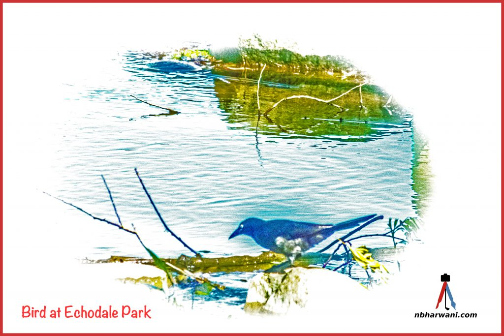 A bird at Echodale Park. (Dr. Noorali Bharwani)