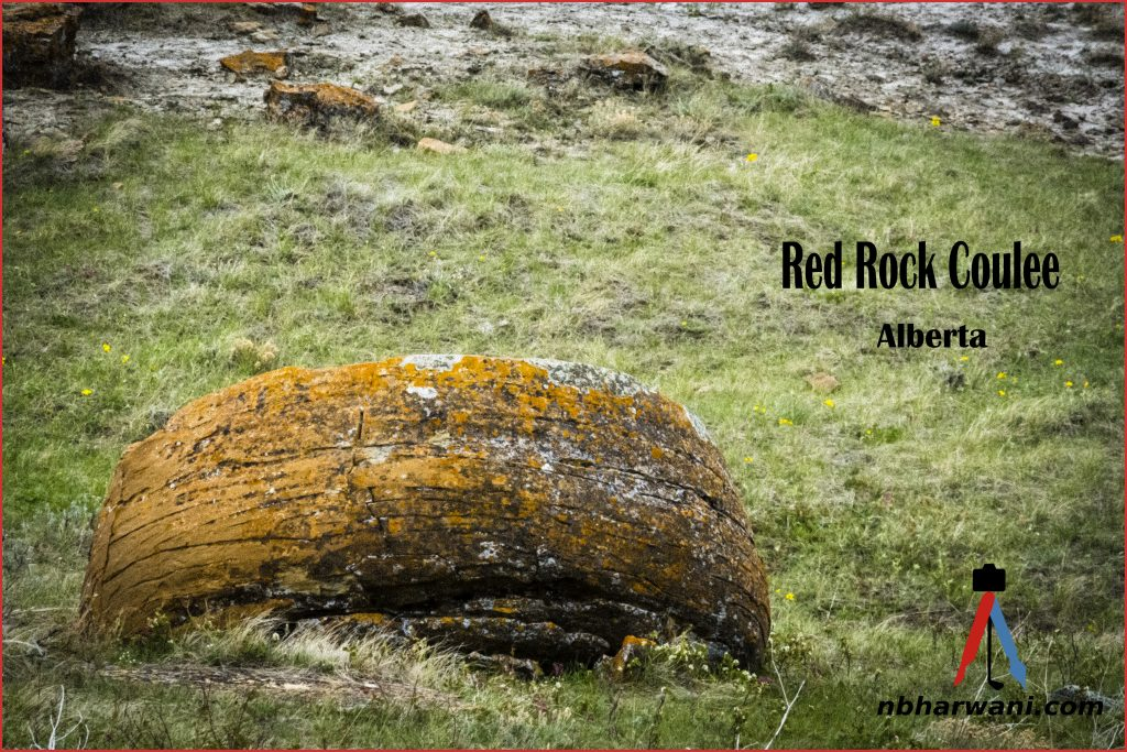 Red Rock Coulee in Alberta, Canada. (Dr. Noorali Bharwani)